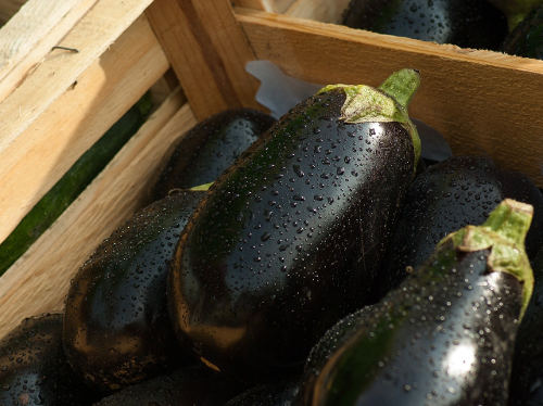 Can You Eat Eggplant Raw