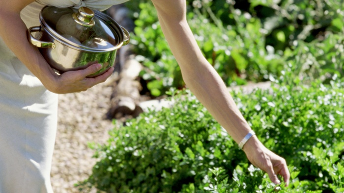 Try These Garden Herbs to Lower Your Blood Pressure