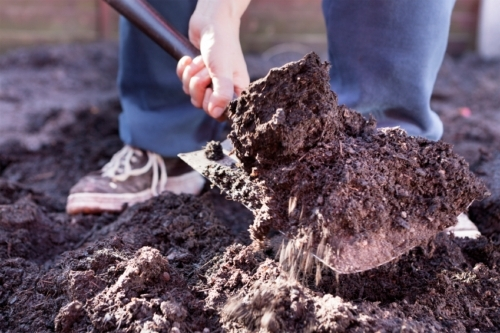 Risk of Foodborne Illness From Raw Manure