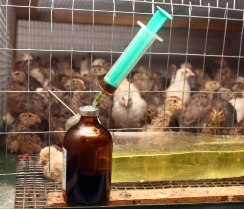 Antibiotic Use in Food