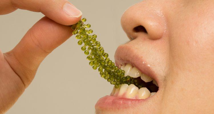 Is Kelp the New Kale? Seaweed Harvesting Growing Across U.S.