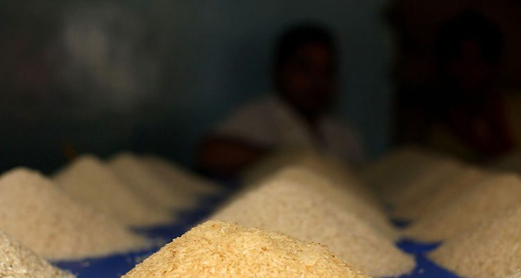 rice fattening