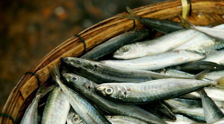 Anchovies vs sardines understand the complete difference for Healthiest types of fish