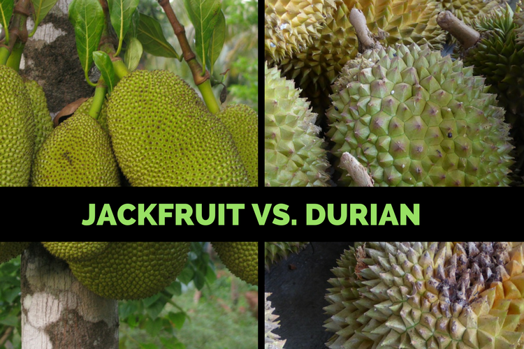 Durian Vs. Jackfruit: Are They The Same or Different? Jackfruit Vs Durian