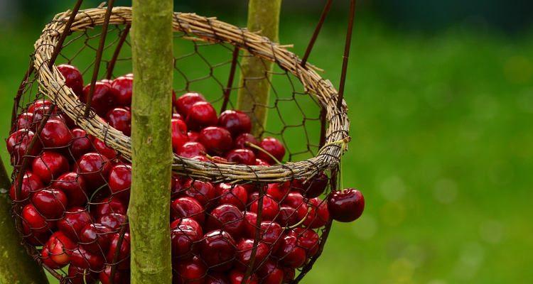 Are Cherries Fattening